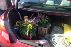 garden show trunk