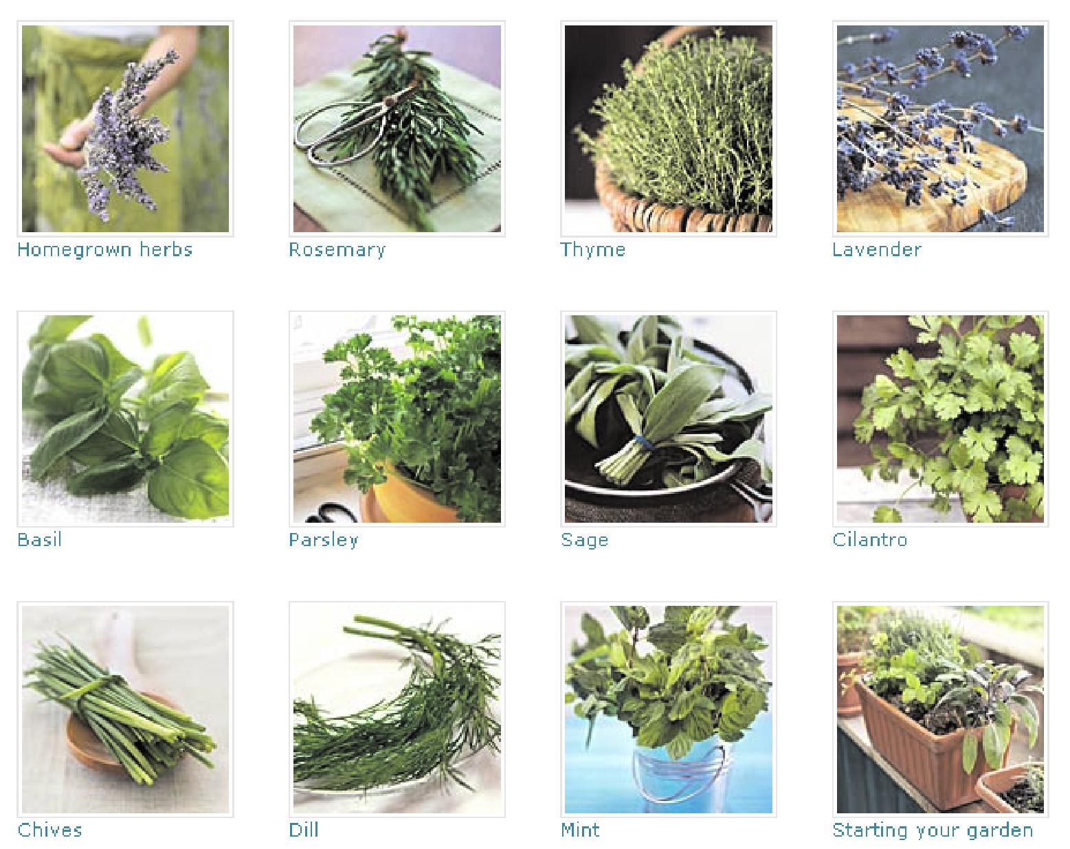 herbs for gardening