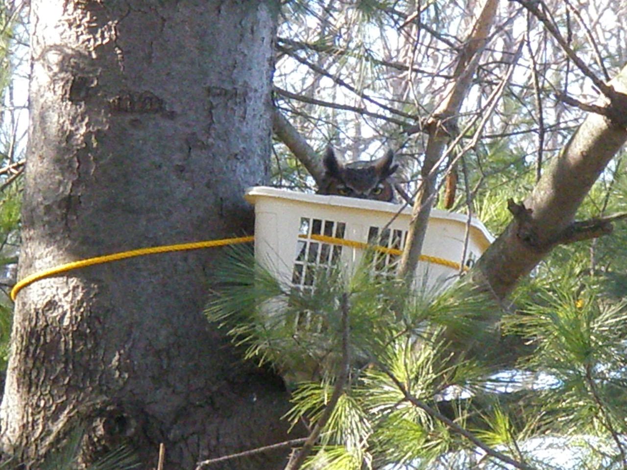 baby owl wildlife rehabilitation valparaiso indiana