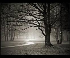 beiker woods night walk munster indiana halloween