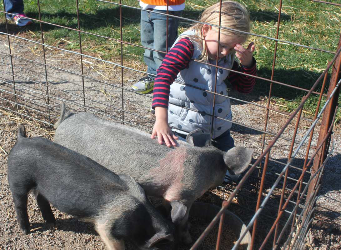 Country A Fair Schererville Indiana Petting Zoo Parks And