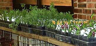 native plants1