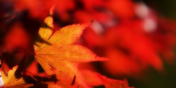 fall leaves background image
