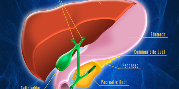 harvested health hepatic system