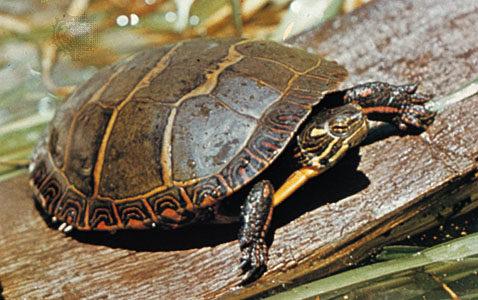reptiles northwest indiana zoo family fun