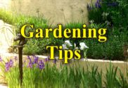 Gardening tips landscaping home curb appeal