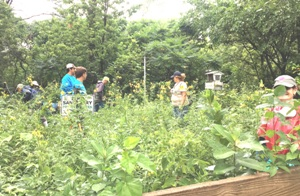 hammond indiana bird sanctuary work day