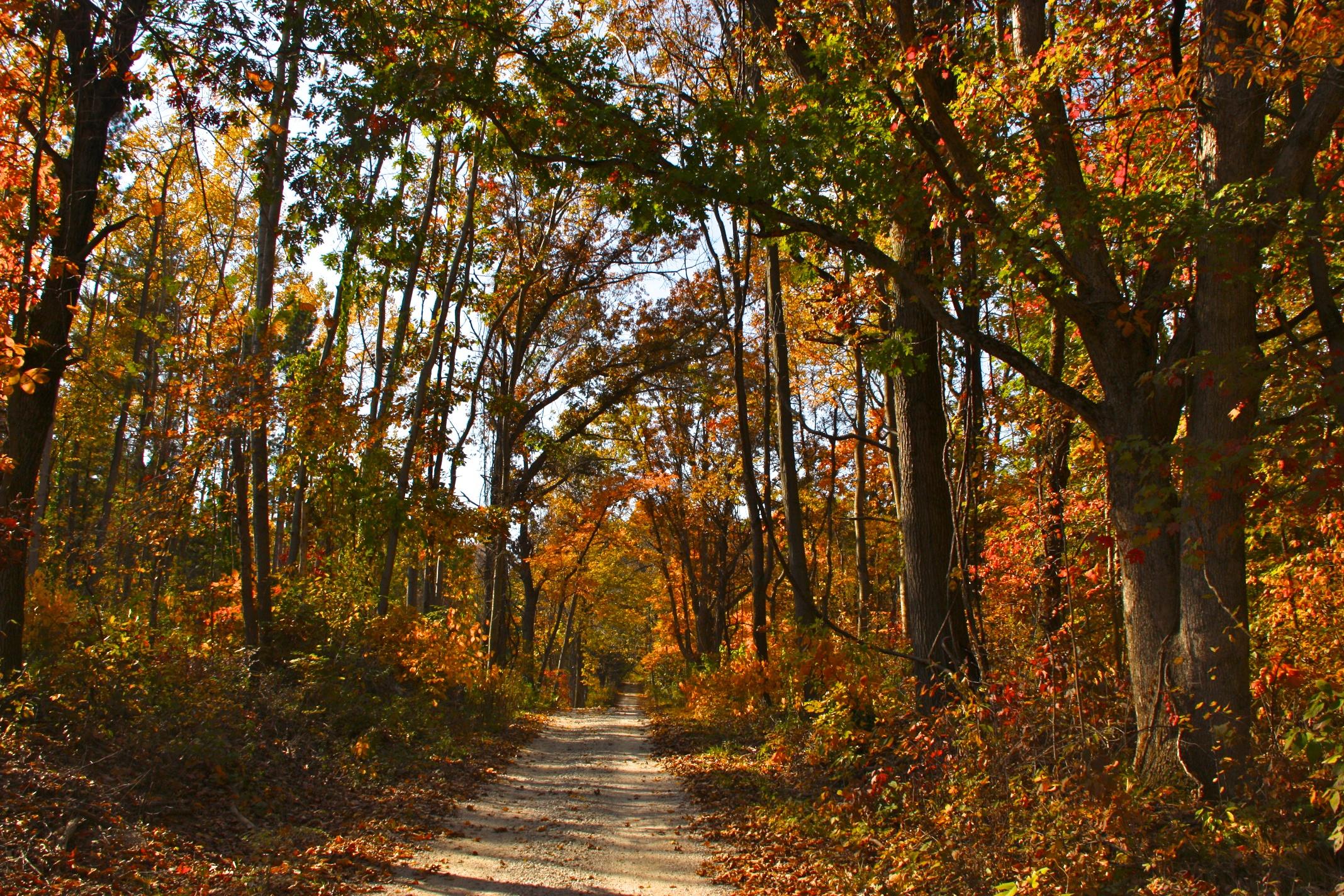 fall trees tourism