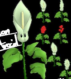 Poison aroid arum plant miller beach gardner center e1543875424486