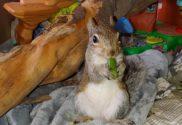 buddy the squirrel