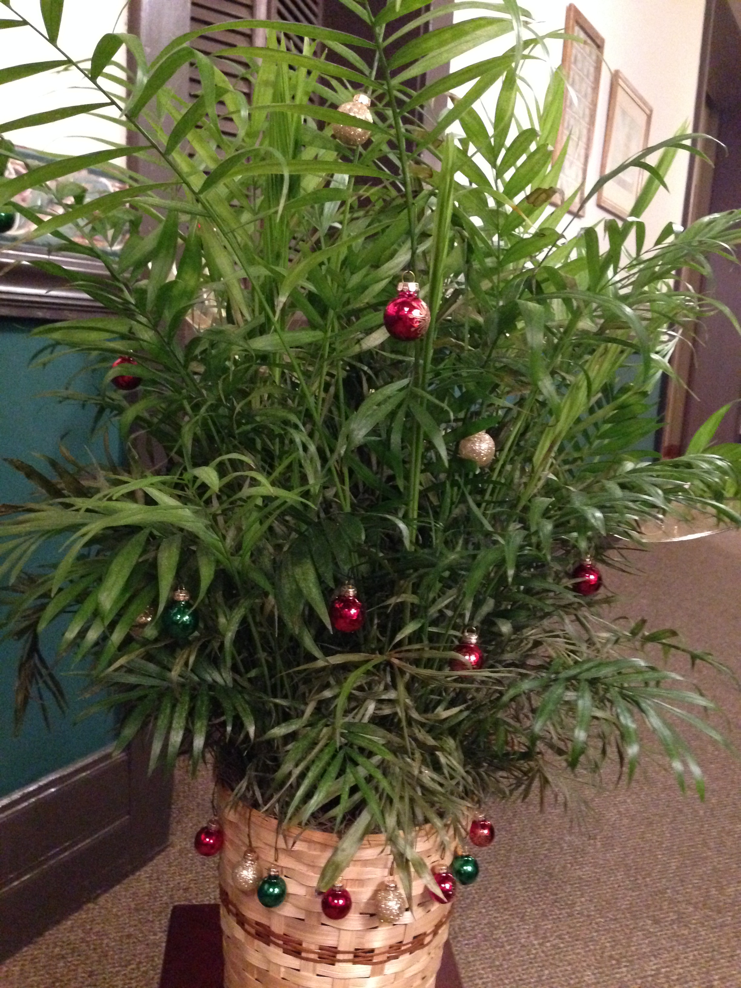 christmas plants gardening