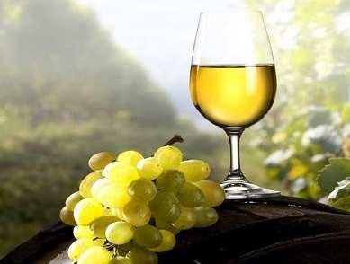 torrontes wine vino argentino argentina