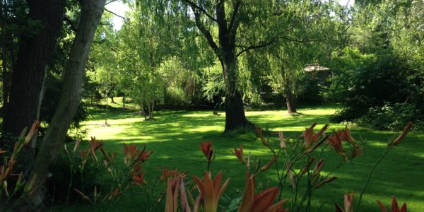 backyard photos 019