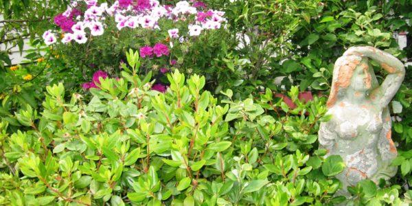 whiting indiana garden walk petunias