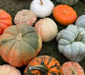 westvill pumpkin festival e1632753902135