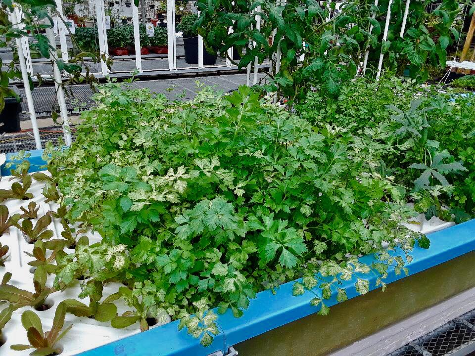 hydroponic plant growth east chicago indiana