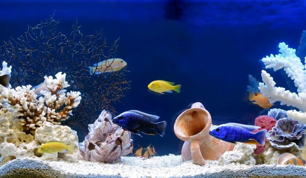 taking care of your home aquarium home improvements