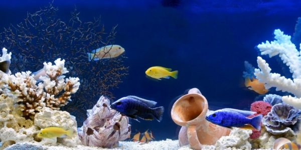 Most Common Beginner Aquarium Mistakes to Avoid