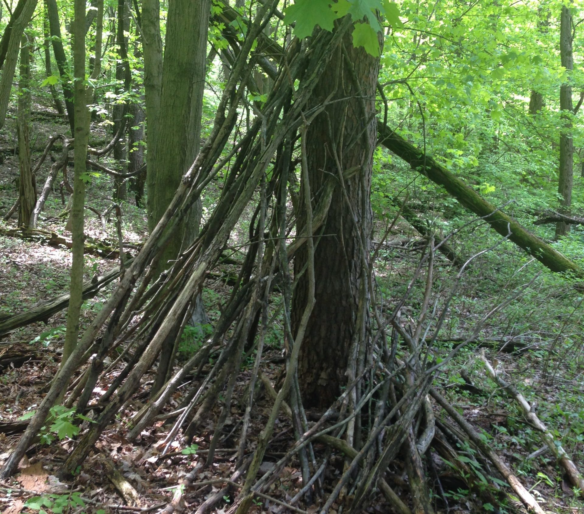 sunset hill blair witch scaled e1589916992639