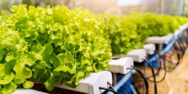 3 Key Reasons You Should Take Up Hydroponics
