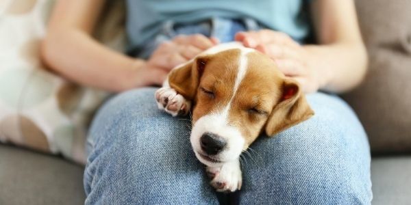 3 Facts Every First-Time Pet Owner Should Know