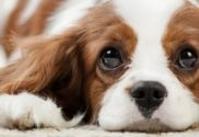 Steps to Puppy-Proofing Your Home