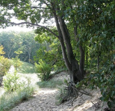 Indiana DUnes hiking parks and recreation e1603727628890