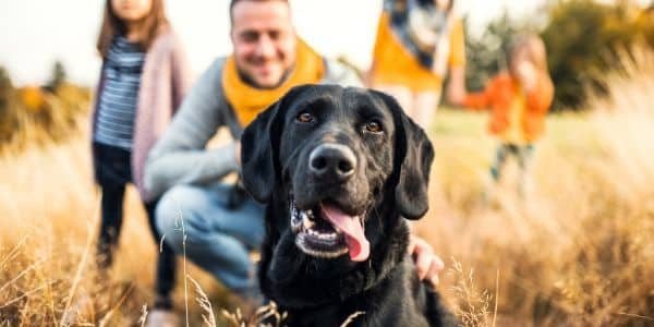 adopting a dog can be good for the family