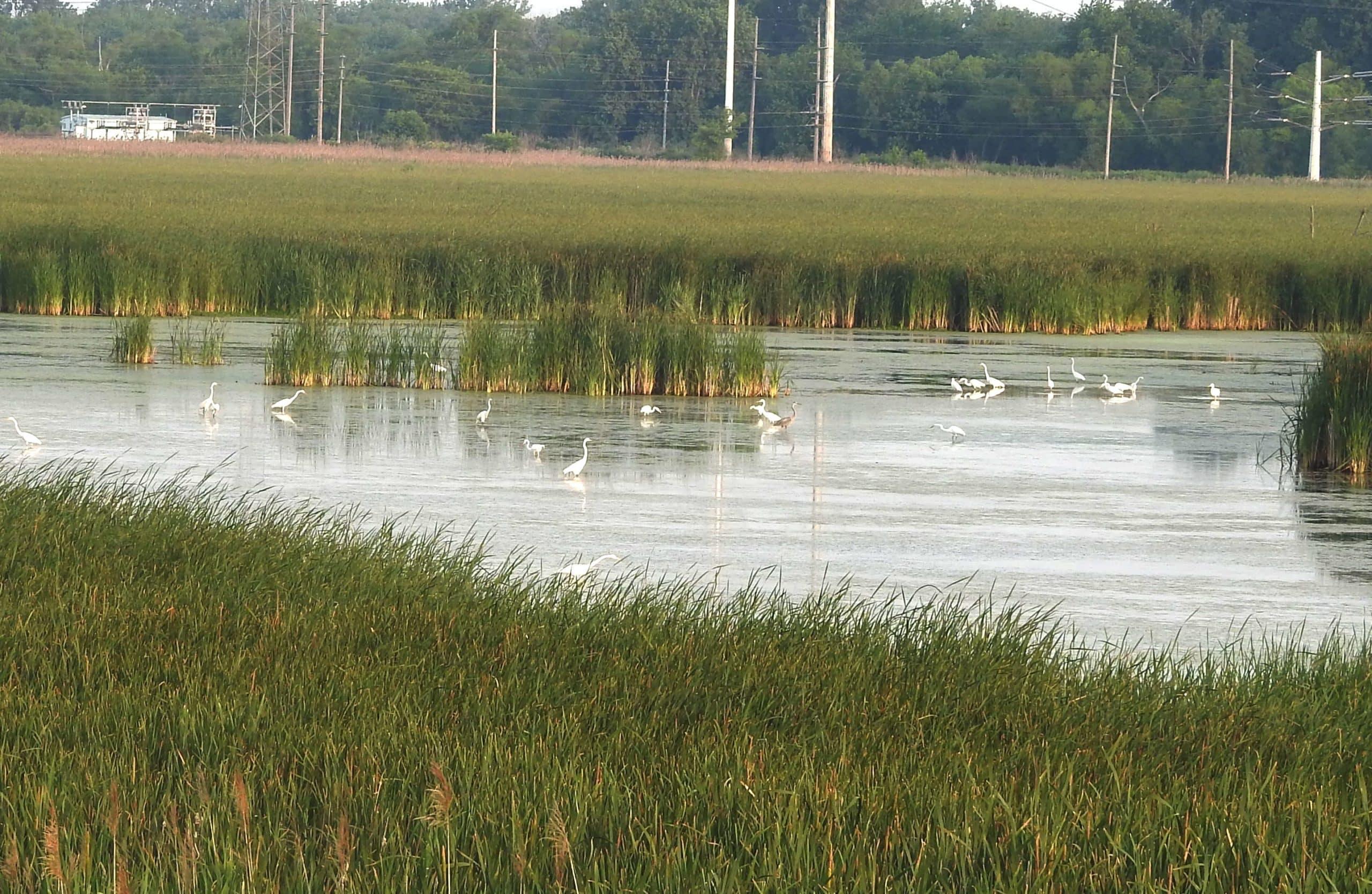 grant street marsh gary indiana birding scaled