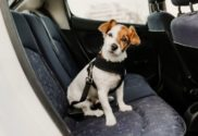 Holiday Traveling Tips for Pet Owners