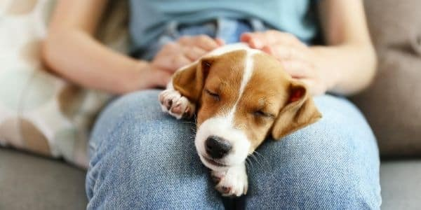 three facts every pet owner should know animals dogs lifetyle