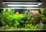 Crucial Tips for Choosing an Aquarium Lighting System