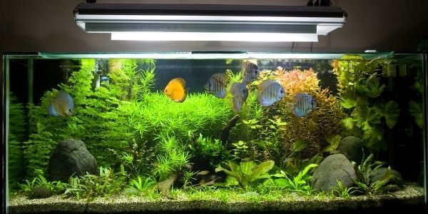 Crucial Tips for Choosing an Aquarium Lighting System