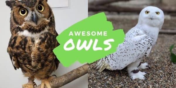 awecome owls valparaiso indiana seminar birding workshop