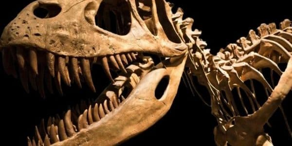 The Best Dinosaur Exhibits in the United States