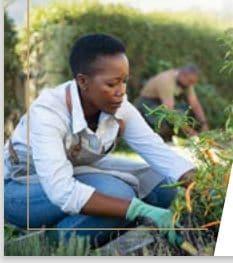 grass to garden purdue university nwindiana gardening tips nwindianalife