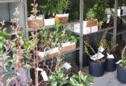 indiana dunes plants sale chesterton indiana nwindianalife e1615987613224