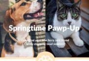 springtime pawp up hammond indiana puppies dogs cats nwindianalife