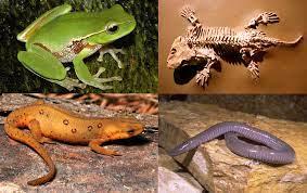 awesome amphibians indiana dunes state park chesterton indiana