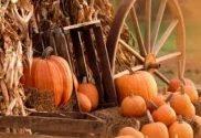 Free fall wallpaper backgrounds pumpkins 1