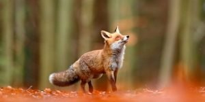 Tips for Photographing Wildlife in the Fall